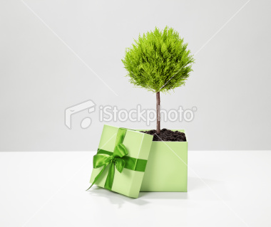 stock-photo-15507797-ecologic-gift