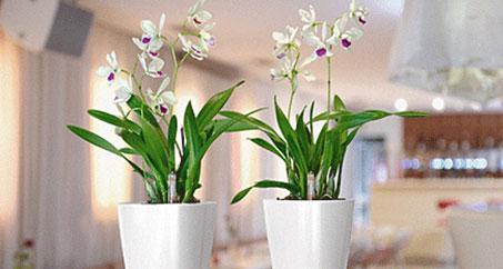 flowersarticle.jpg